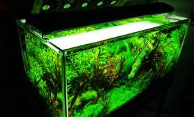 我家的鱼缸水草缸哈哈哈沉木杜鹃根青龙石水草泥