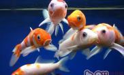观赏鱼水质生熟度简介