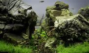 非常漂亮的石头又一个旷野缸