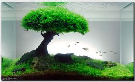 Aquascape of the Month: September