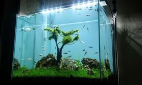 小树小景水草缸但是灯光亮鱼缸水族箱了鱼缸水族箱
