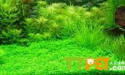 水草的繁殖方法介绍