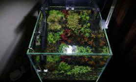 新开两个30方缸水草缸一阴一阳水草缸贵在折腾