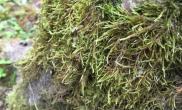 釆风回来水草缸整理了些草缸造景可以参考的图鱼缸水族箱(三)