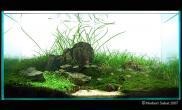 水草缸造景沉木水草泥化妆砂青龙石90CM尺寸设计40
