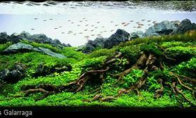 远近青龙石近景沉木水族装饰
