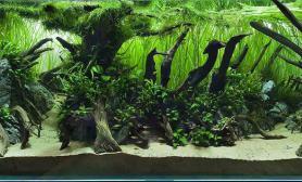 水草缸造景沉木水草泥化妆砂青龙石120CM尺寸设计98