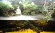 水草造景水陆造景