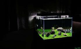 石景缸风格大全水草缸无特点不入选鱼缸水族箱
