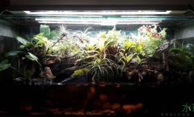 水草造景1图片2米水陆缸