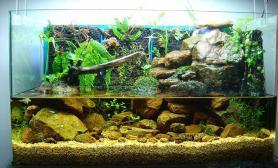 水草造景溪涧---水陆缸