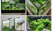 哎水草缸完全放养的后果鱼缸水草造景图片