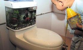 马桶养金鱼(图)