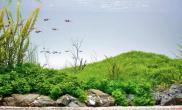 沉木青龙石水草造景120CM尺寸设计33