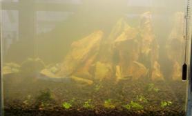 办公室20方缸水草缸新骨架求指点沉木杜鹃根青龙石水草泥