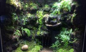 好久没上论坛了水草缸分享一下我的雨林