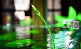 【异植-草缸印象】茂色染碧 幽泓流绿