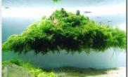 水族箱造景超越自然---加里·吴  