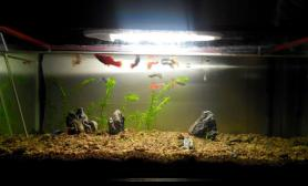 鱼缸造景新建草缸