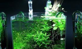 水族馆里的青翠小缸