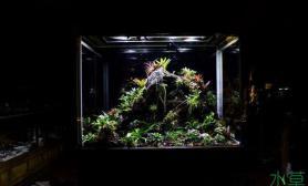 美丽的雨林生态缸
