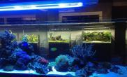 国外水族店水草缸造景aquaproject