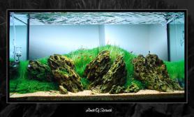 水草缸造景沉木水草泥化妆砂青龙石90CM尺寸设计19