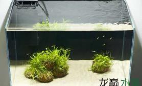 很酷的设计水草缸另类的艺术