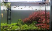 鱼缸造景60 45 45LED灯养的草