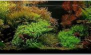 P大转帖集之造景水草缸造景由自然風轉型成荷蘭式的水族造景