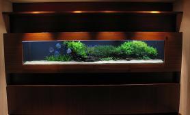 沉木青龙石造景缸与家装空间-21