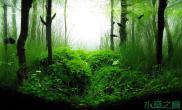 水草造景分享我的2个小水景沉木杜鹃根青龙石水草泥沉木杜鹃根青龙石水草泥