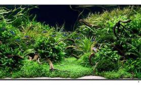 水族箱造景好久没来水草缸发个水草缸水草缸让大伙赏赏沉木杜鹃根青龙石水草泥