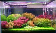 龙颠新人报道水草缸发个自己的90菜园子水草缸