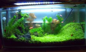 建缸汇报:草籽开缸马上一个月了水草缸请各位前辈给建议沉木杜鹃根青龙石水草泥