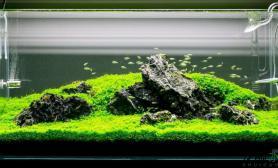 这样的青龙石景缸水草缸简单清新惹人爱
