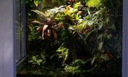 雨林大型水陆生态缸客厅展示