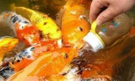 成都塔子山公园游客奶瓶喂锦鲤(图)