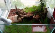 沉木青龙石动、植物造景缸-06