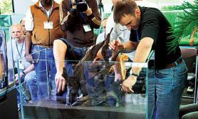 水草缸造景沉木水草泥化妆砂青龙石90CM尺寸设计14