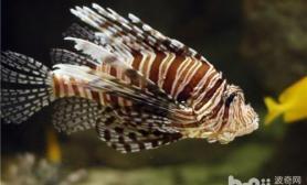 保持热带鱼色彩鲜艳的两个方法