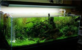 水草缸造景沉木水草泥化妆砂青龙石150CM及以上尺寸设计44