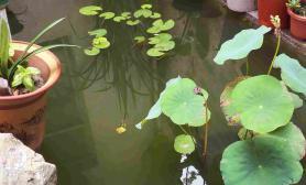 老家的鱼池