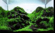 沉木青龙石水草造景60CM尺寸设计15