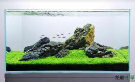 青龙石上水草缸灯鱼群游水草缸简单温馨