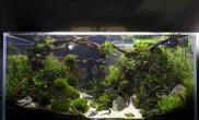原创造景鉴赏IAPLC2014世界水草造景排名455野彩草缸