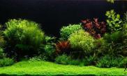 水草造景美图收藏(二)水草缸精彩继续