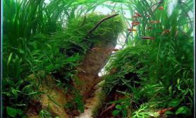 水草缸造景沉木水草泥化妆砂青龙石45CM及以下尺寸设计12