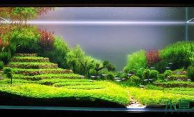 水草造景梯田梦