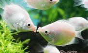 适合新手饲养的小型观赏鱼种类